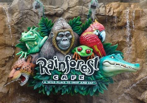 Rainforest Cafe Gift Card - get a 15 rainforest cafe gift card for 7 50 disney every day