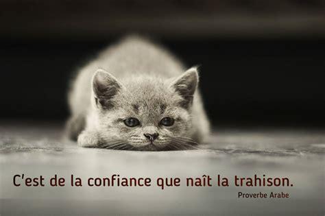 imagenes uñas gatos proverbe sur la confiance belle citation sur la vie et