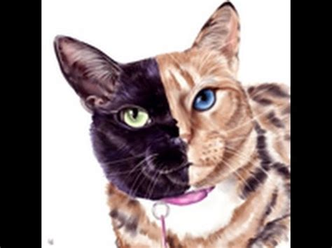 cat paint tool sai venus the two faced cat paint tool sai speed painting