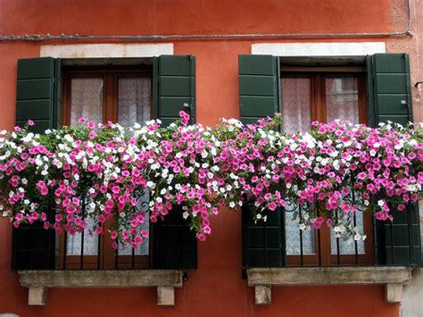 terrazzi in fiore venezia terrazzi in fiore flickr photo
