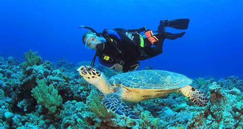dive in scuba pm reef or wreck 1 tank dive scuba diving bahamas