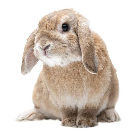 alimenti per gatti sterilizzati rabbyfibra sterilizzati alimento per conigli nani