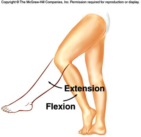 Flexi On look after your health through your reflexologyfarnham
