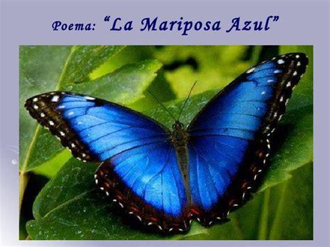 imagenes de mariposas azules con frases poes 237 a de la naturaleza quot la mariposa azul quot