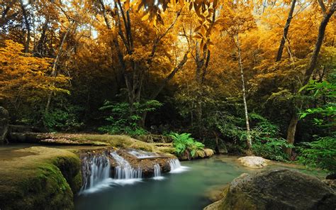 beautiful images beautiful forest stream 34430 2560x1600 px hdwallsource com