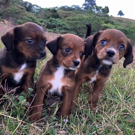 puppy land land of the strays home to 1000 happy dogs
