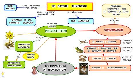 catena alimentare nel bosco mappa concettuale catene alimentari