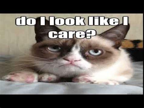 Grumpy Cat Meme Clean - the grumpy cat meme funniest the grumpy cat meme