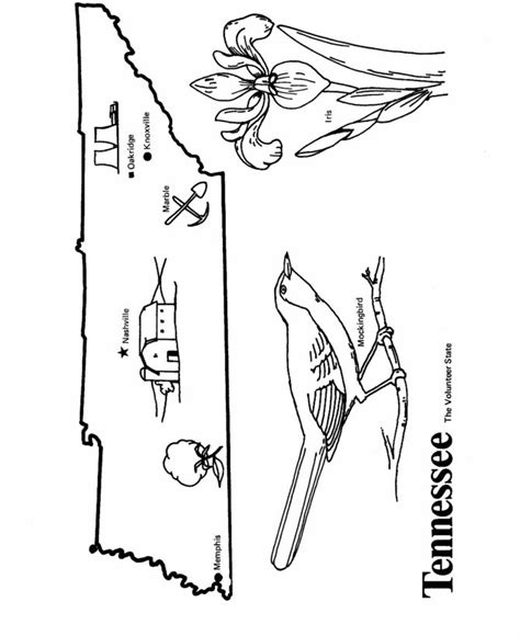 tennessee state tree coloring page coloring pages