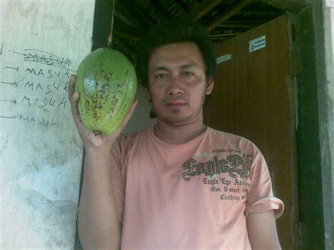 Bibit Jambu Air Delima pbn alpukat alligator pear