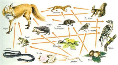 catena alimentare nel bosco reti alimentari nel bosco