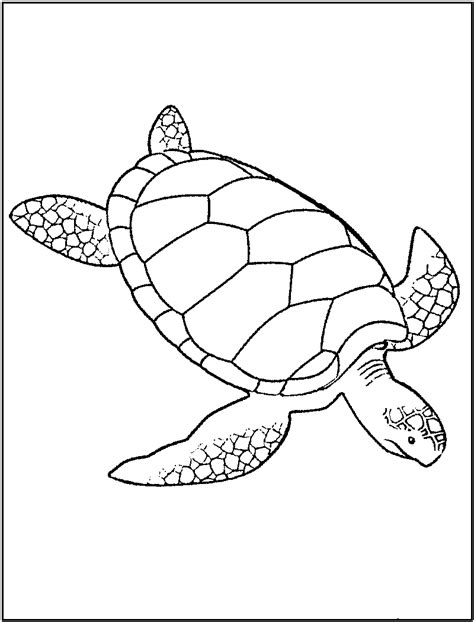 free coloring pages of baby turtle