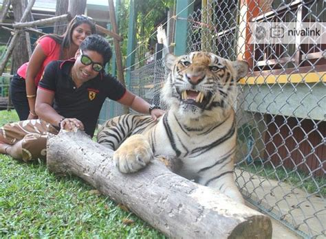 tiger kingdom travel idea  holiday getaway packages