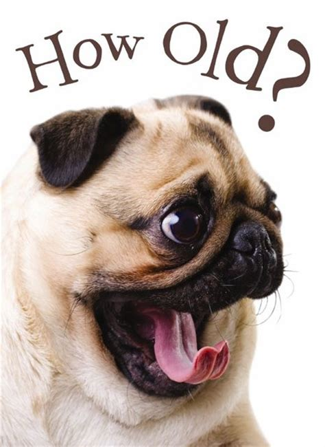 Birthday Pug Meme - pug birthday ecards google search happy birthday
