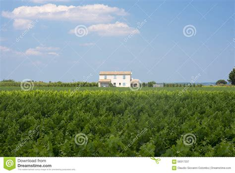 white house france white house in camargue provence stock photo image 59317337
