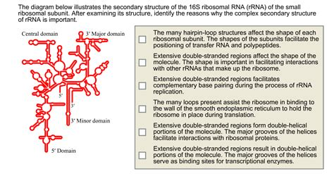 the diagram illustrates a small portion of several myofibrils solved the diagram below illustrates the secondary struct