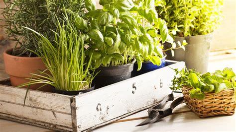erbe aromatiche in vaso piante aromatiche in vaso come si coltivano