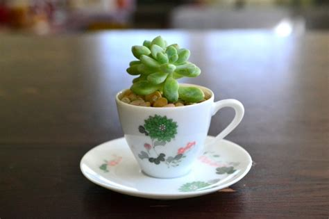 Tin Table Teacups Amp Saucers The Republic Of Succulents