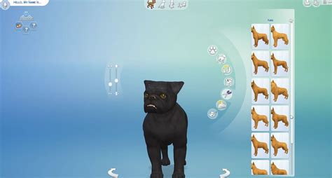 images   sims  cats  dogs pt