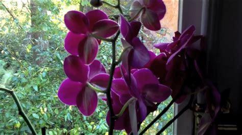 Wie Pflegt Orchideen Richtig 4793 by Orchideen Bew 228 Ssern Pflanzen Richtig Pflegen Und Gie 223 En