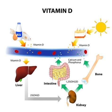 vitamin d deficiency free 1 hour vitamin d lecture 90 essential nutrients vitamin d dr john bergman