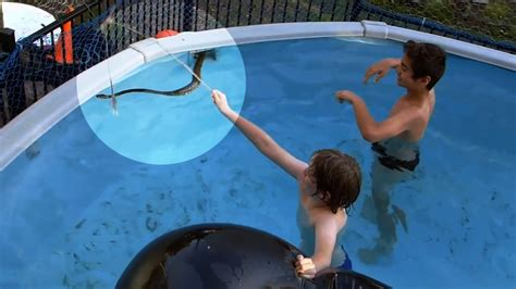 pug rescue mobile alabama python sneaks into swimming pool with on the feed cbs news