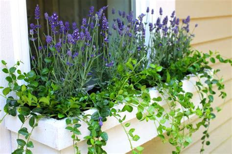Best Window For Plants The Best Perennials To Plant In Window Boxes Ehow