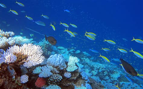 for snorkeling maldives snorkeling how to do it what to expect