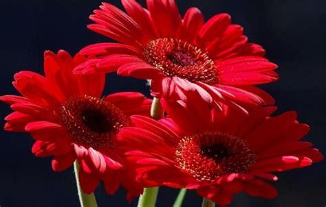 imagenes de movimiento y brillo imagenes de rosas rojas hermosas con movimiento imagen