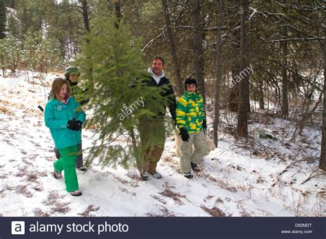 christmas tree farms near boise family cutting a tree in the boise national forest near stock photo royalty free