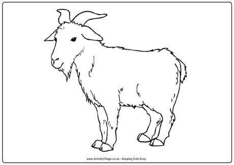 chinese new year goat coloring page bleating goats 18 goat coloring pages and pictures print