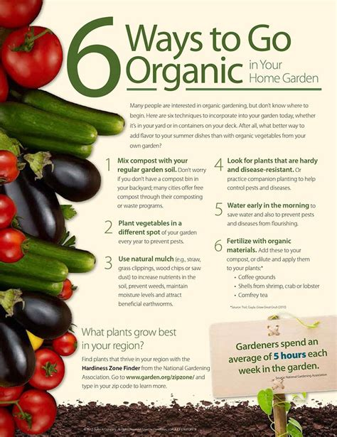 garden tips 1000 ideas about organic gardening tips on pinterest