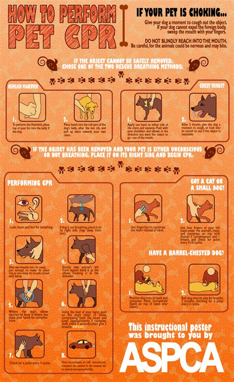 cpr dogs free printable pet cpr and emergency pet posters how to do cpr on a