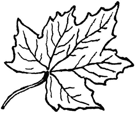 Clip Art Leaf Drawing Clipart Free Leaf Coloring Pages