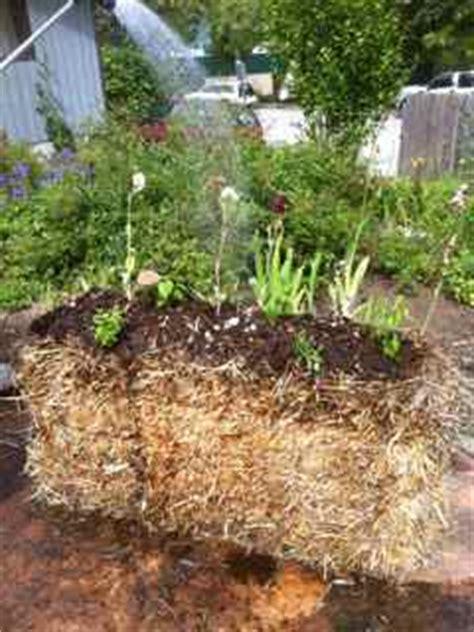 alternative layout for landscape alternative vegetable garden straw bale gardening easy