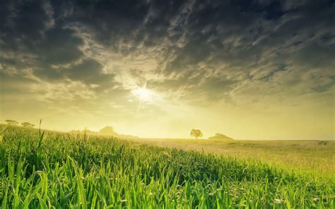 nature landscape field sun grass hd wallpaper wallpaper 2560x1600 196184 wallpaperup