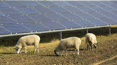 livestock and solar panels rangelands farm power green energy opportunity offers earnings and