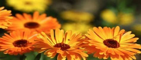 mostra fiori firenze mostra mercato di piante e fiori giardino dell