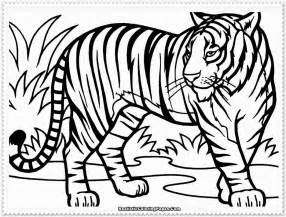 coloring pages of tigers realistic tiger coloring pages realistic coloring pages