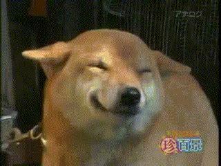 happy puppy gif happydog reaction gifs