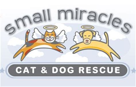 small miracles cat and rescue hale pet door maryland rescue organizations