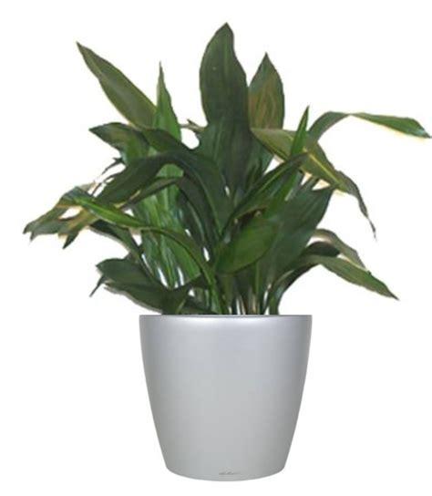 plants that survive with no light plants that survive with no light 7 perfect indoor plants