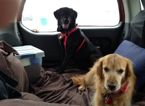 how to get dog hair out of car upholstery blog post how to get pet hair out of car upholstery