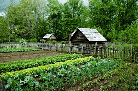 homestead vegetable gardening 7 ways cover crops can revolutionize your homestead