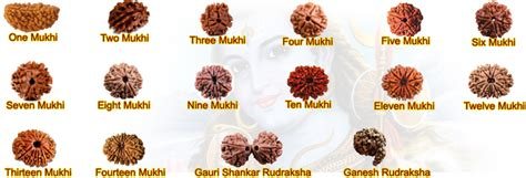 rudraksha meaning astrology products rudraksha ruby emerald blue