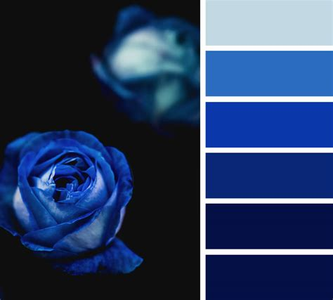 royal color scheme midnight blue and royal blue color scheme color palette