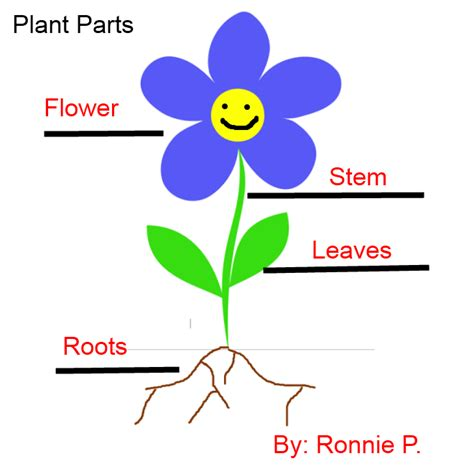 label flower diagram labeling flowers stems leaves and roots k 5 computer