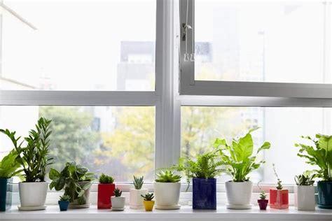 lighten   images indoor plants bedroom plants