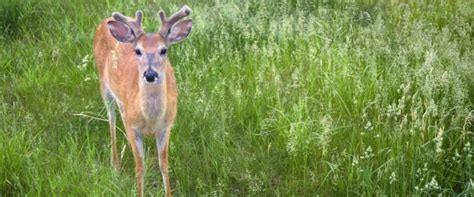 What Can I Feed Deer In Backyard by Town Fines 233 95 For Feeding Deer In Own Backyard