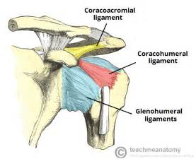 Pics photos ligaments of the shoulder joint ligaments of the